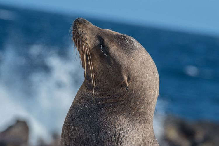 Beach Galapagos Sea Lion Galapagos Islands Wild Nature Nikon D810 Sea Lion Natural Habitat Ecuador