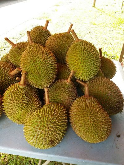 Durian Thorn Fruits KingofFruits D24 Maran Pahang