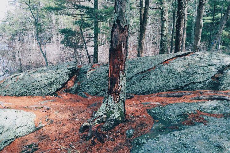 Landscape Nature Trees Colors Green Orange Shadows Moss Woods