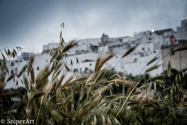 Architecture Beauty In Nature Close-up Cold Temperature Day Grass Growth Landscape Nature No People Outdoors Plant Rural Scene Sky Snow Winter