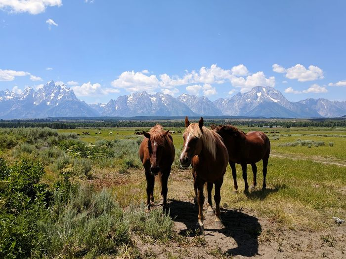 Horses Ranch EyeEm Selects Mountain Rural Scene Agriculture Standing