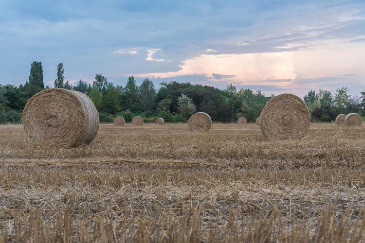 Field of round