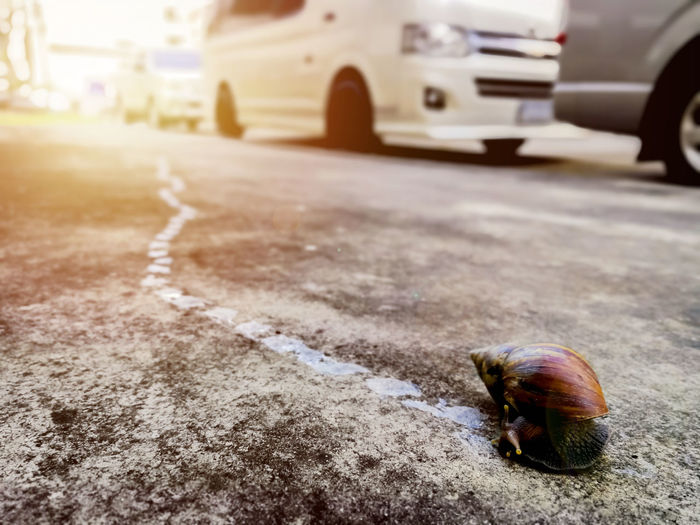 Close-up of shell on the road