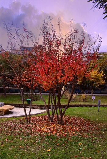 Autunnomagico Beauty In Nature Nature Fall Magicfall Leafaddicted Fogliomane Fogliomani Alberi Trees Nopeople Outdoors All'aperto It'sakindogmagic Akindofmagic