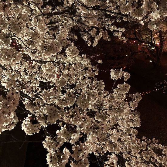 Illuminated Cherryblossom Full Frame Backgrounds No People Nature Beauty In Nature Water Pattern Tranquility