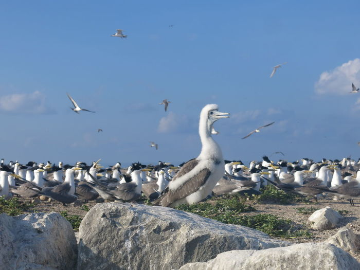 Flock of seagulls on rock at beach