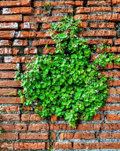 Plants And Flowers thingsthatgrowinthemostunusualplaces Ostia Ostiaantica Wall Wall Of Bricks Plants Growing Into The Wall Plants 🌱 Photobydperry Italy Italia