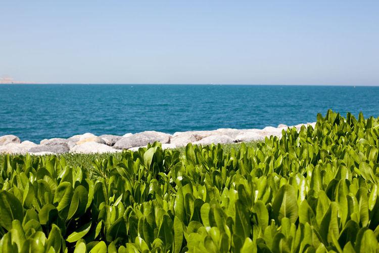 Ornamental plant on the lawn, beautiful landscape