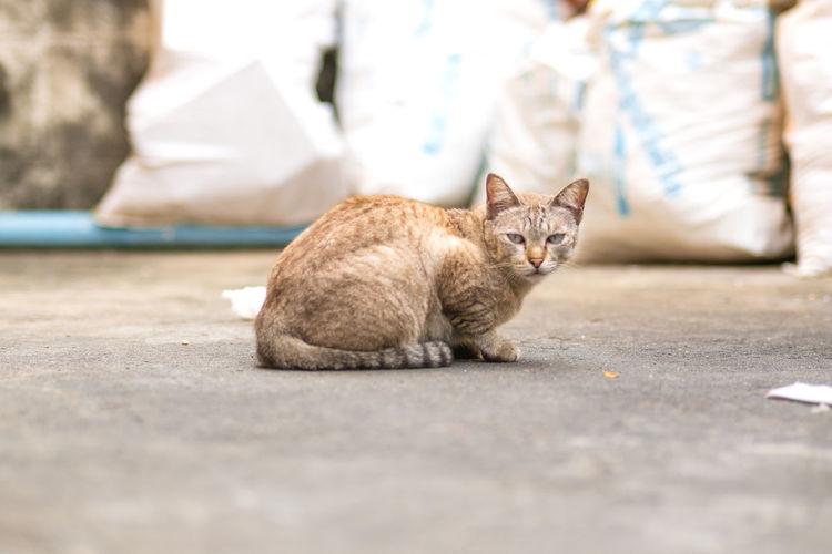 Portrait of cat sitting on street