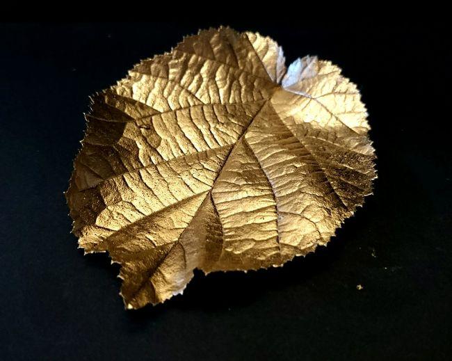 Leaf Thegoldenleaf Colors Gold Closeupshot Golden