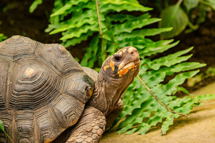 Close-up of tortoise on plant