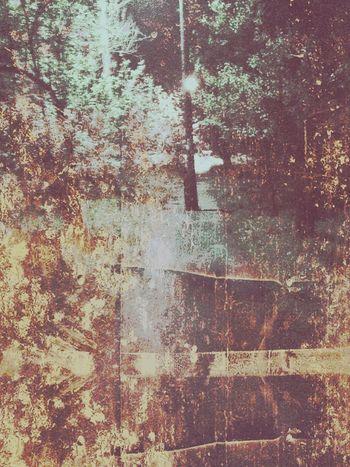 Fantasy World Nature Narnia  Fairy Land