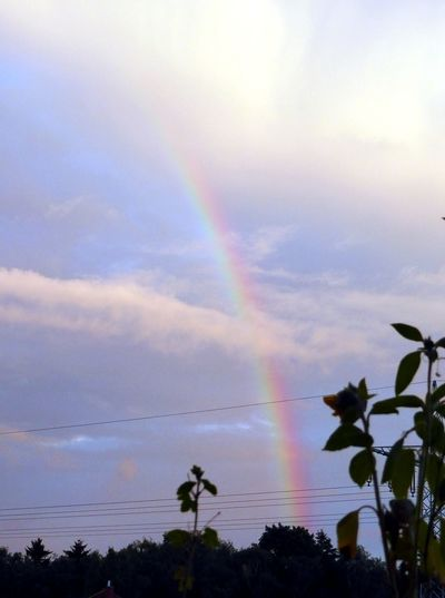 Rainbow🌈 Rainbow At Cloudy Sky Enjoying Life Beautiful Scenery For My Friends On Eyeem Beauty In Nature Simple Beauty Naturelovers Enjoying Life Colour Of Life Light Up Your Life Rainbow Sky Sky_collection View From The Window... Relaxing
