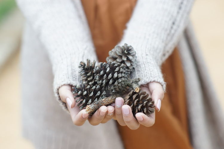 Close-up of hand holding pine cones