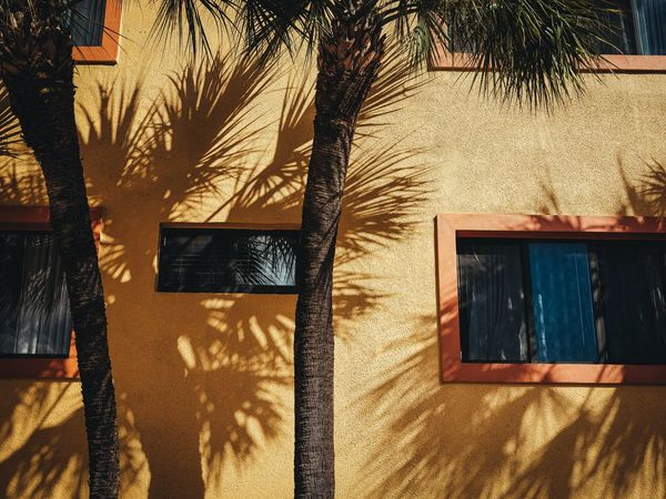 Tropic Shadows Fujifilm_xseries Windows Street Photography Photographyisthemuse Palm Trees Outdoors Light And Shadow Florida Day Built Structure Building Exterior Sunlight GFX50s Architecture