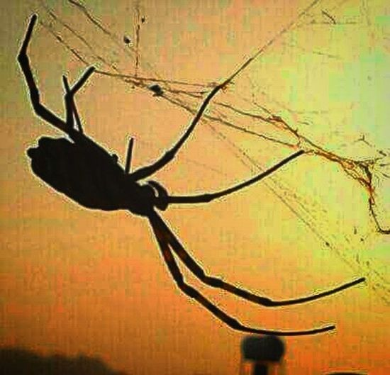 No People Close-up Outdoors Day Spider Web Spider Spider Nature_collection Eyenaturelover Sunset Sunlight Sun Spiderweb Spider. Iskele Sky Famagusta