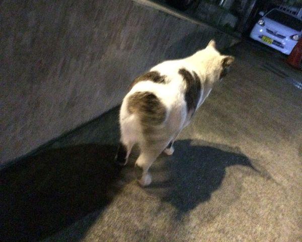 Stray Cat 野良猫 夜ねこ ぶんぶん♪w