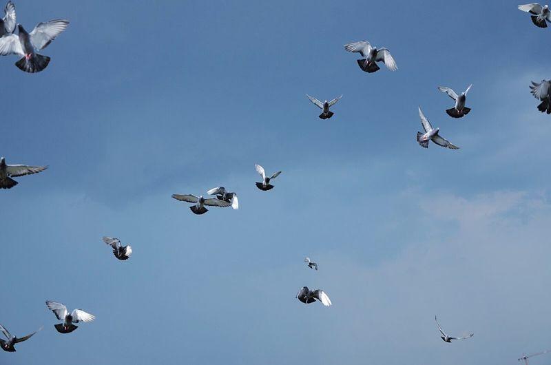 Birds Pigeons Bird Photography Birds In Flight Animal Photography Pigeons ATTACK Natural Beauty Natura