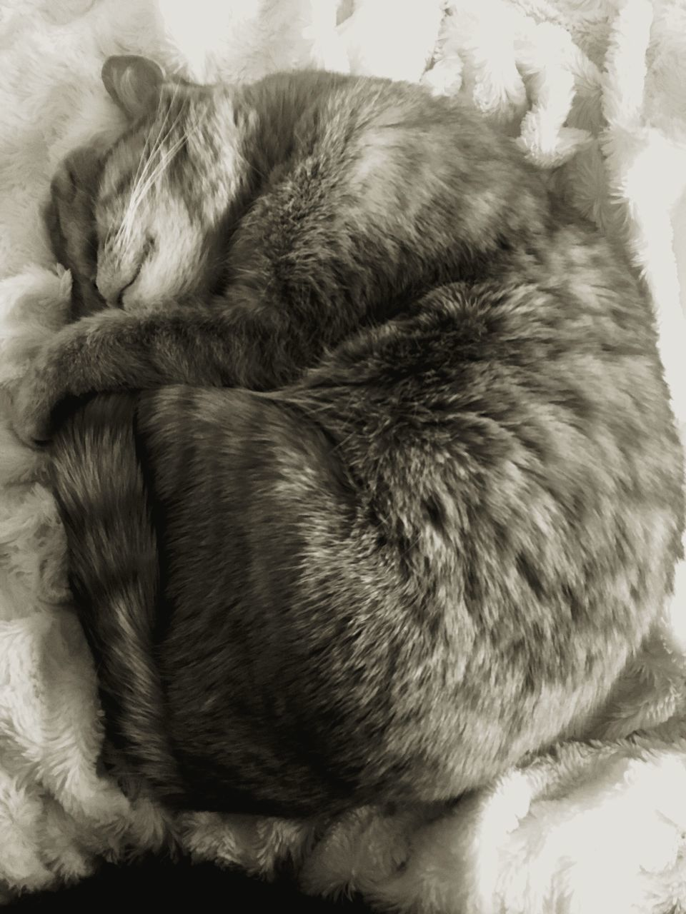sleeping, indoors, comfortable, mammal, relaxation, pets, domestic animals, no people, animal themes, close-up, nature