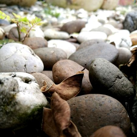 Rocks Wilted Stones Way Nature Outdoors Close-up Day No People