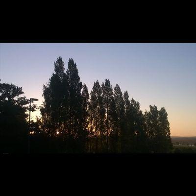 Un beau Leverdesoleil avec les Oiseaux qui chantent / A beautiful Sunrise with singing Birds Alba Amanecer Taupont Morbihan Miamorbihan Bretagne Breizh Jaimelabretagne Sky Ciel Cielo Himmel Instasunrise Instagram Igsunrise Arbres Trees