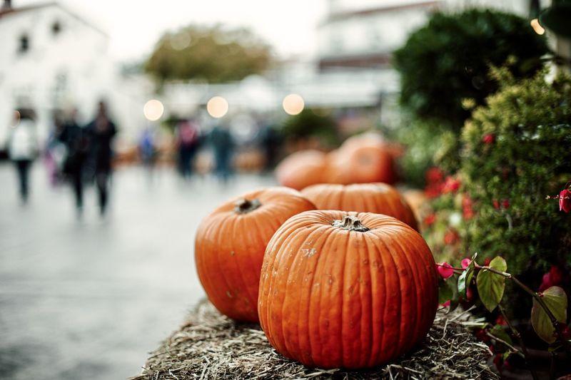 Close-up of pumpkin pumpkins outdoors