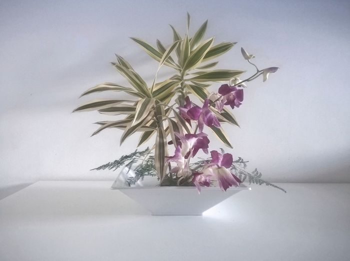 Bunch Of Flowers Day Decoration Flower Flower Arrangement Flower Head Fragility Freshness Growth Home Interior Houseplant IKEBANA Indoors  No People Orchid Orchidee Orchids Plant Pot Plant Potted Plant Simplicity Still Life Vase Violet 生け花