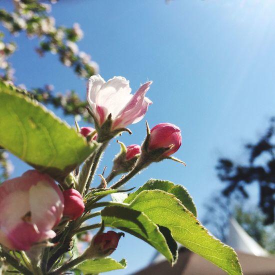 Spring Hello World