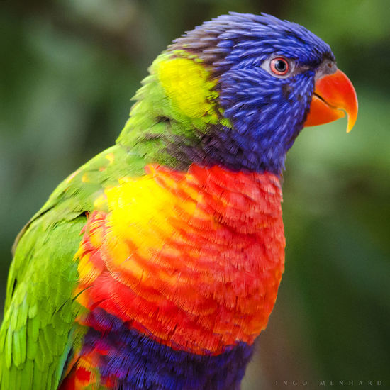 Close-up of parrot