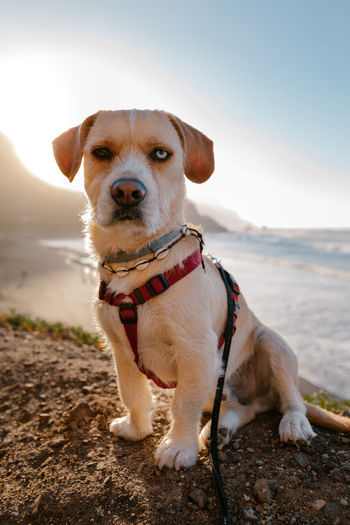 Portrait of a dog on the beach