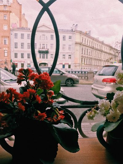 Flower Building Exterior Architecture Built Structure Day City No People Outdoors Freshness Close-up Fragility Nature Flower Head Sky Saint Petersburg Window Cafe