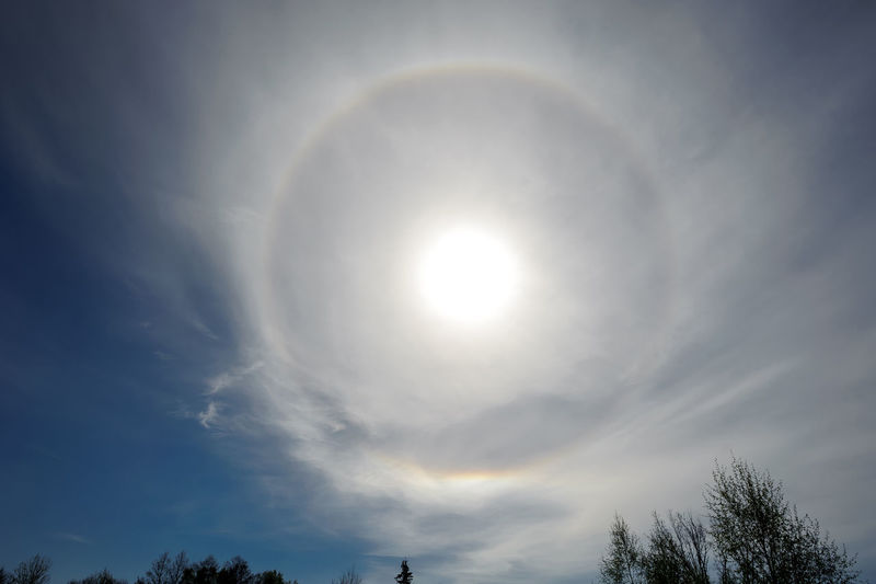 Halo Astronomy Beauty In Nature Circular Halo Cloud - Sky Day Halo HALOS HaloSun Ice Crystals Low Angle View Nature No People Optical Phenomenon Outdoors Scenics Sky Solar Halo Sun Sunlight Tranquil Scene Tranquility Tree The Great Outdoors - 2017 EyeEm Awards