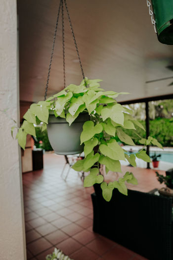 Close-up of potted plant hanging on floor