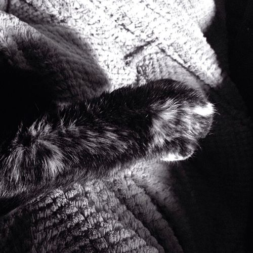 Good Morning 😽 Cat's Paw Black & White One Animal Day Close-up Animal Themes Indoors  Nature