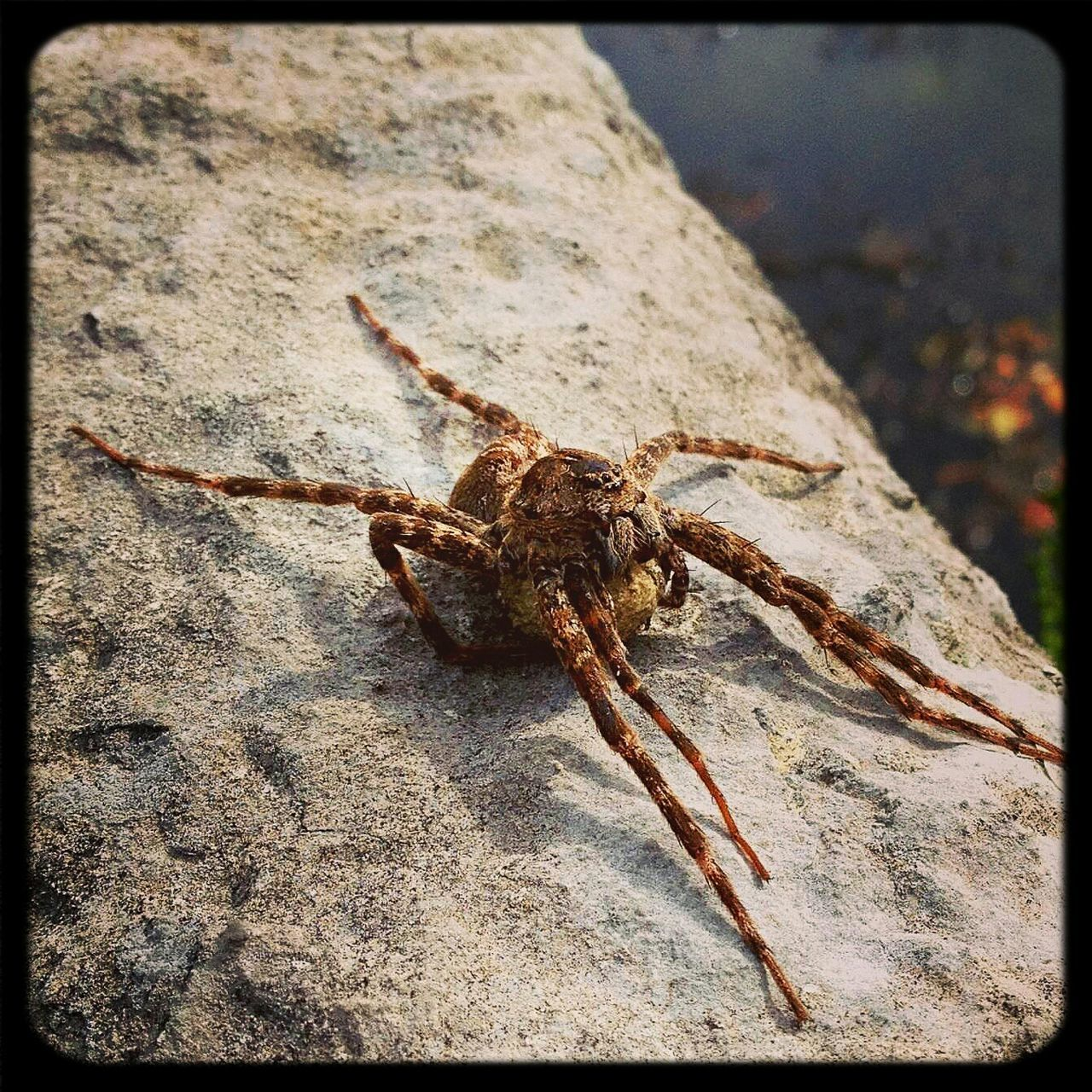 Close-Up Of A Spider On Rocky Surface