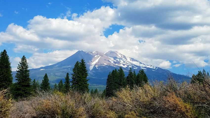 Mount Shasta, CA Mountain Cloud - Sky Tree Landscape Snowcapped Mountain Travel Destinations Snow Pinaceae Surreal Sky Scenics Depth Dramatic Lighting Serene Zen Tranquil Peaceful Restful Commune With Nature Mindful Meditation Strong Force Of Nature The Week On EyeEm California Dreamin
