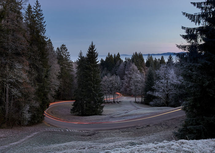 Road Beauty In Nature Cold Temperature Day Direction Growth Lighttrails Nature No People Non-urban Scene Outdoors Plant Road Scenics - Nature Sky Snow The Way Forward Tranquility Transportation Tree Winter