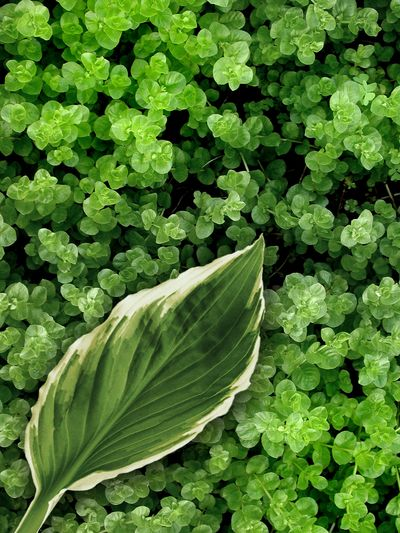 Beauty In Nature Close-up Day Flower Foliage Food Food And Drink Fragility Freshness Green Color Growth High Angle View Leaf Nature No People Outdoors Plant Plant Part Vegetable Vulnerability