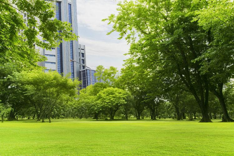 Trees growing on field against buildings in city