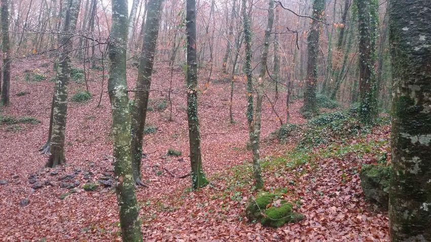 Nature No People Outdoors Forest Beauty In Nature Tree Catalunya Fageda Fageda D'en Jorda Fagedadenjorda Olot Garrotxa Zonavolcànica EyeEmNewHere