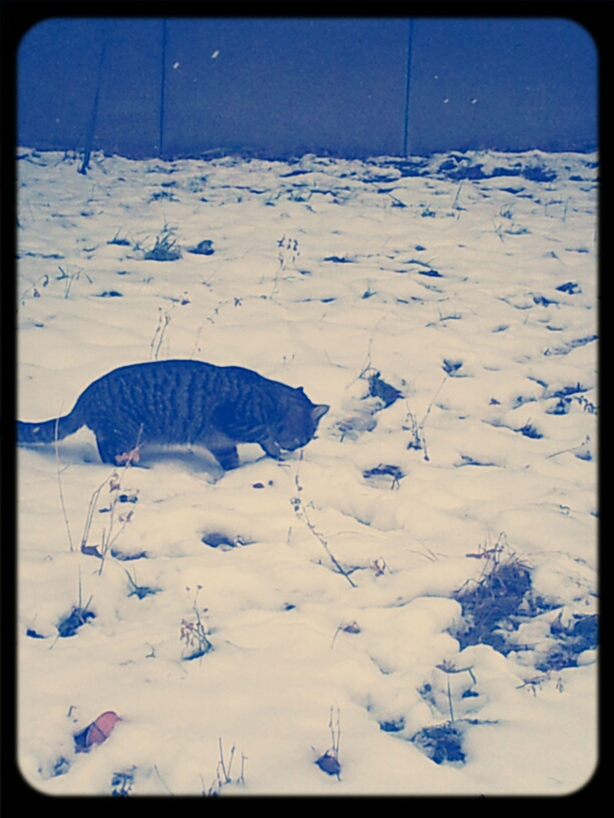 snow, winter, cold temperature, season, weather, covering, tranquil scene, tranquility, landscape, beauty in nature, scenics, white color, nature, snow covered, mountain, non-urban scene, transfer print, field, frozen, white