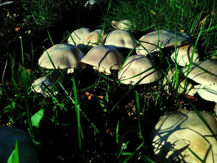 Mushroom Morning . Nature Outdoors Fungus Growing Growth Beauty In Nature Rainy Days Grass Toadstool