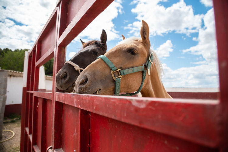 Horse in ranch against sky