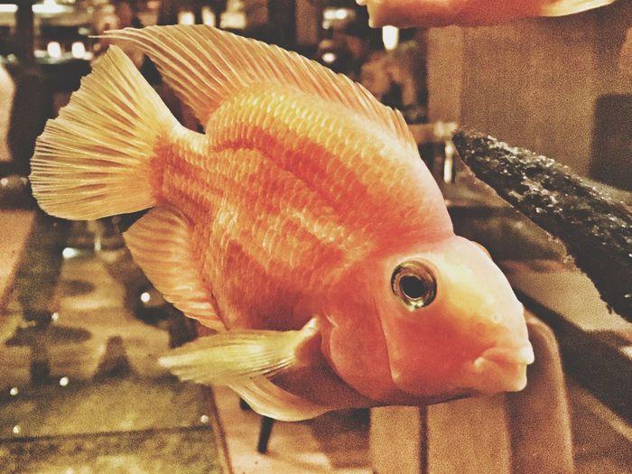 Fish Dinner Time Sameprocedureaseveryyear Food Gapa1516