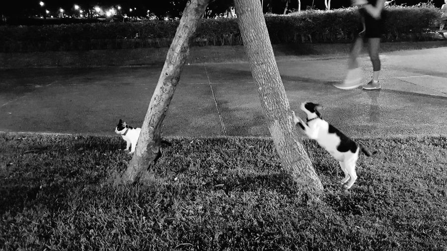 public pets Cats Feline Two Cats Kitten Public Park Lawn Scratch Playground Jogging On The Way City Life Exercise Benjakiti Park Mobilephotography Tree Trunk Trees Green Space Water Pets Childhood Motion Playing Togetherness