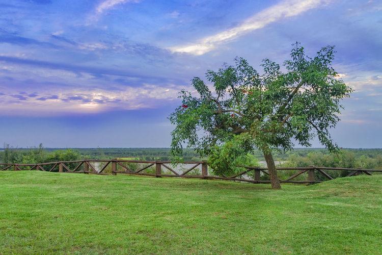 Landscape at