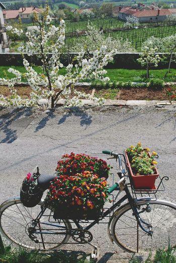 High angle view of bicycle