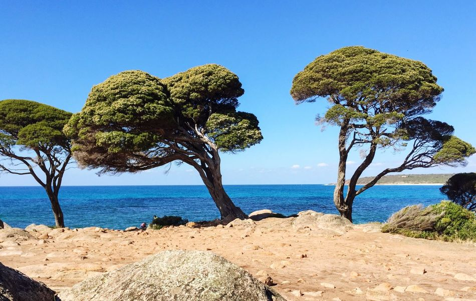 Crooked Treescape Bunker Bay Southwest  Beachscape Three Trees Coastal Feature