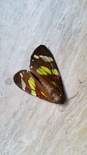 Mariposa Dead