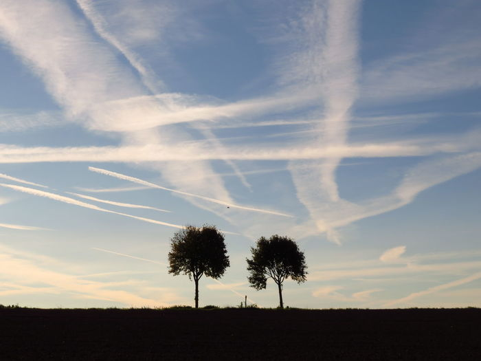 Silhouette trees on field against sky